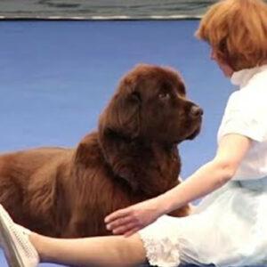 Taniec z psem